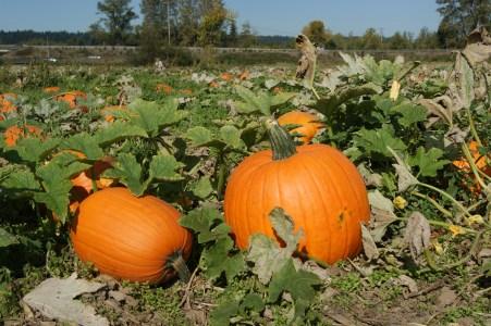 A perfect pumpkin