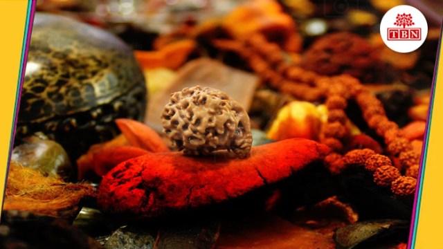 thebiharnews-in-rudraksha-and-its-benefits