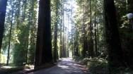 Walking in the redwoods