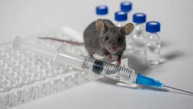Scientists regrow mouse's amputated toes - lab mouse