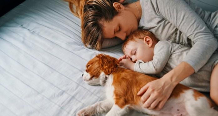 Sleep Quality Header (The Bulletproof Blog)