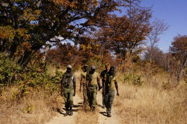 Looking for snares set by poachers