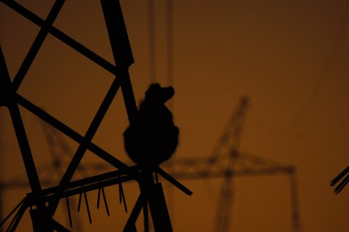 Baboons climbing the electricity towers around