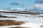 Reindeers walking on a snowfield the first day. A beautiful sight