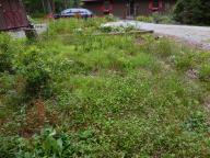 The whole bog garden