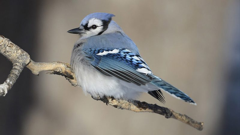 Habitats for Birds (In Pictures)