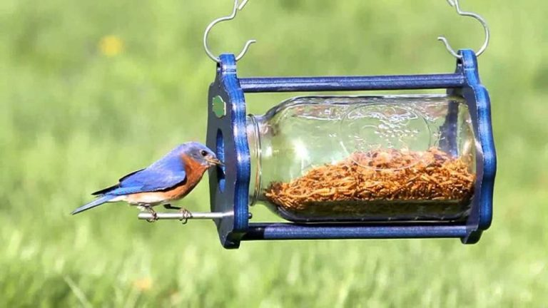 How to Feed Mealworms to Birds.