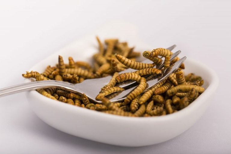 Concerning Mealworms