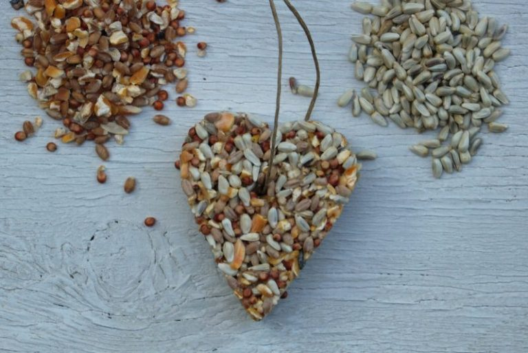 Just How to Feed Safflower Seeds