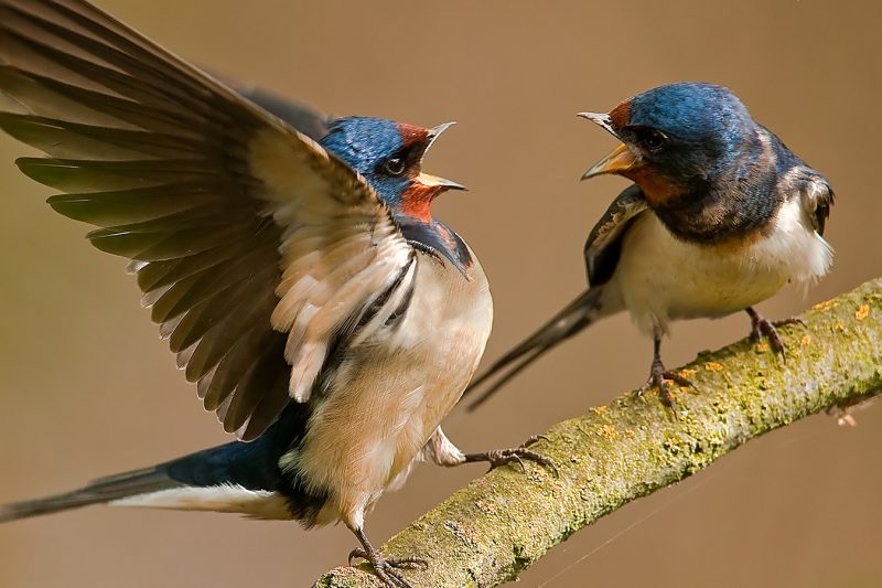 Bird Characteristics