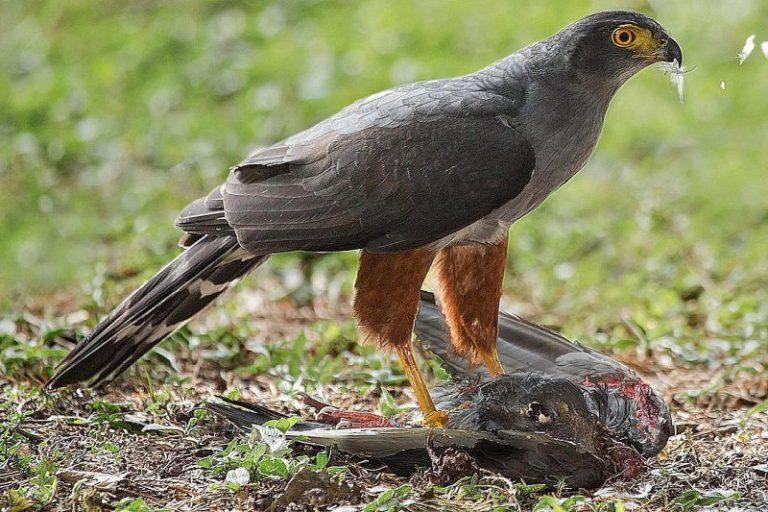 what eats birds