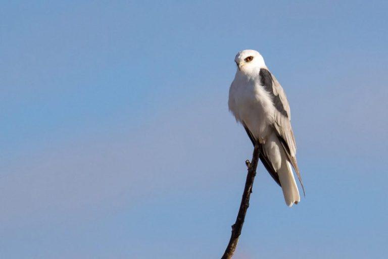 idaho birds