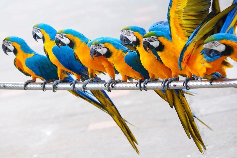 what do parrots eat