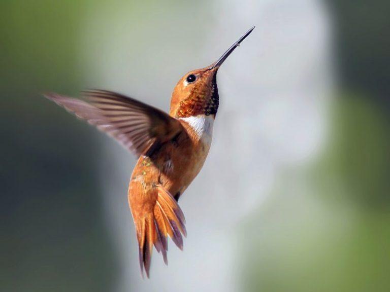 northwest birds