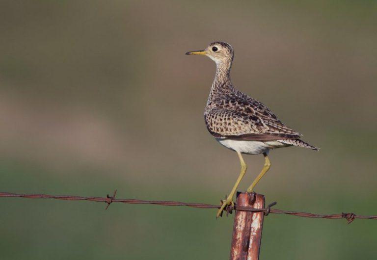wisconsin birds