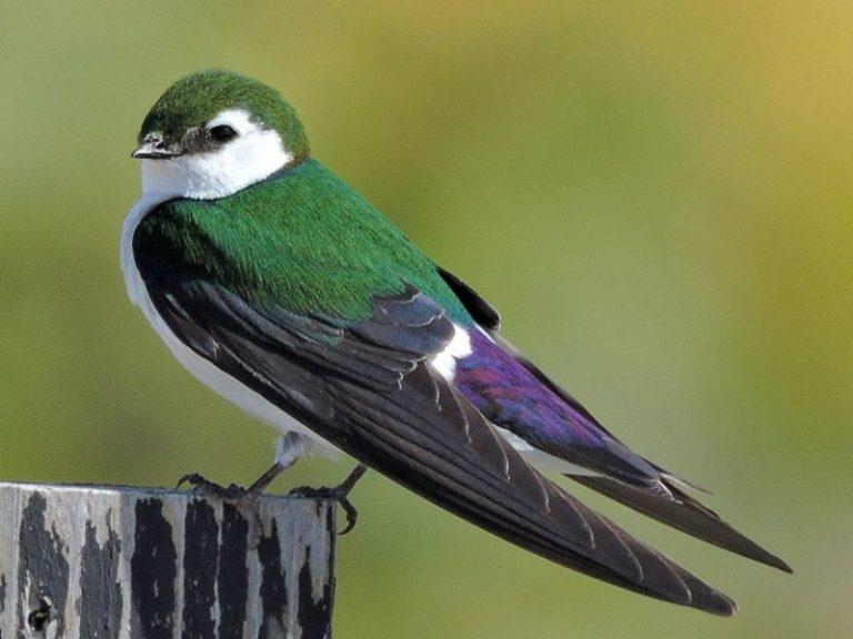 Alaska Birds