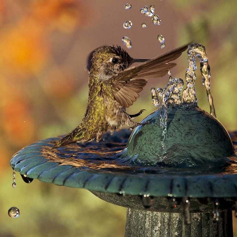 best bird bath for hummingbirds