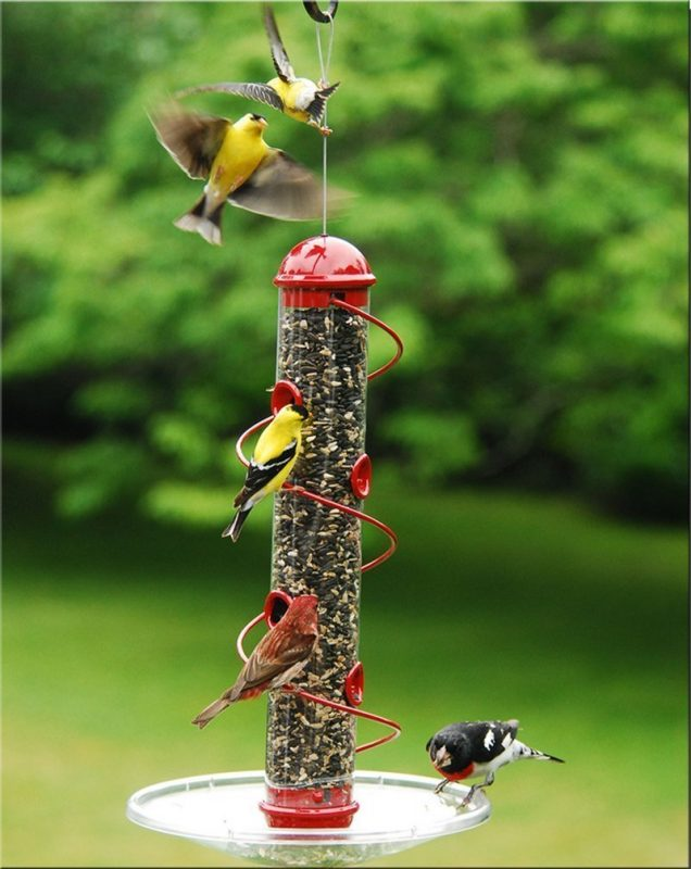Bird Quest SBF2Y Spiral Thistle Bird Feeder