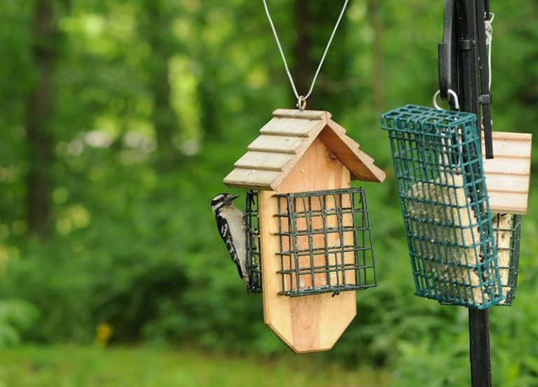 Clean The Feeder on a Daily Basis