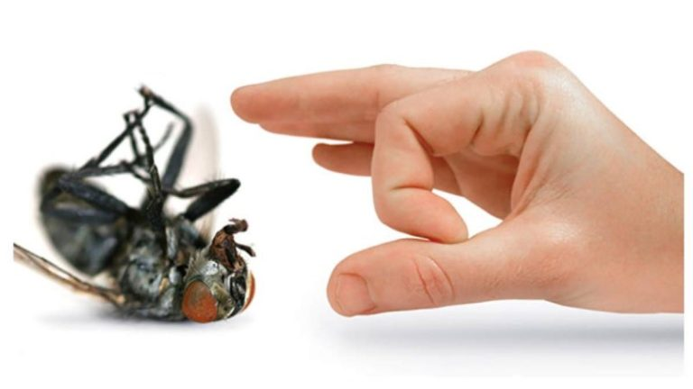 How Not to Remove Insects