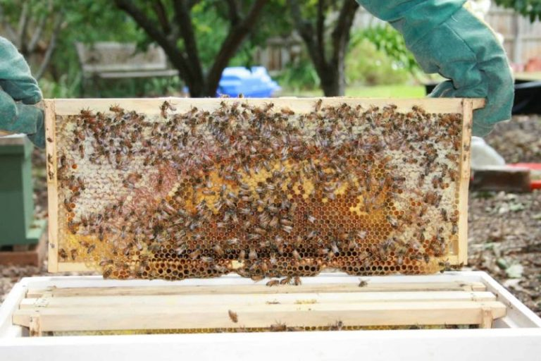 Install Bee Guards