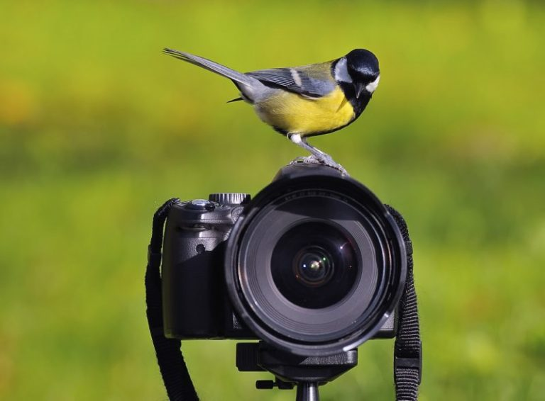 Best Camera for Bird Photography