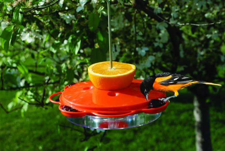 Birds Choice 1009 Oriole-Fest Oriole Feeder