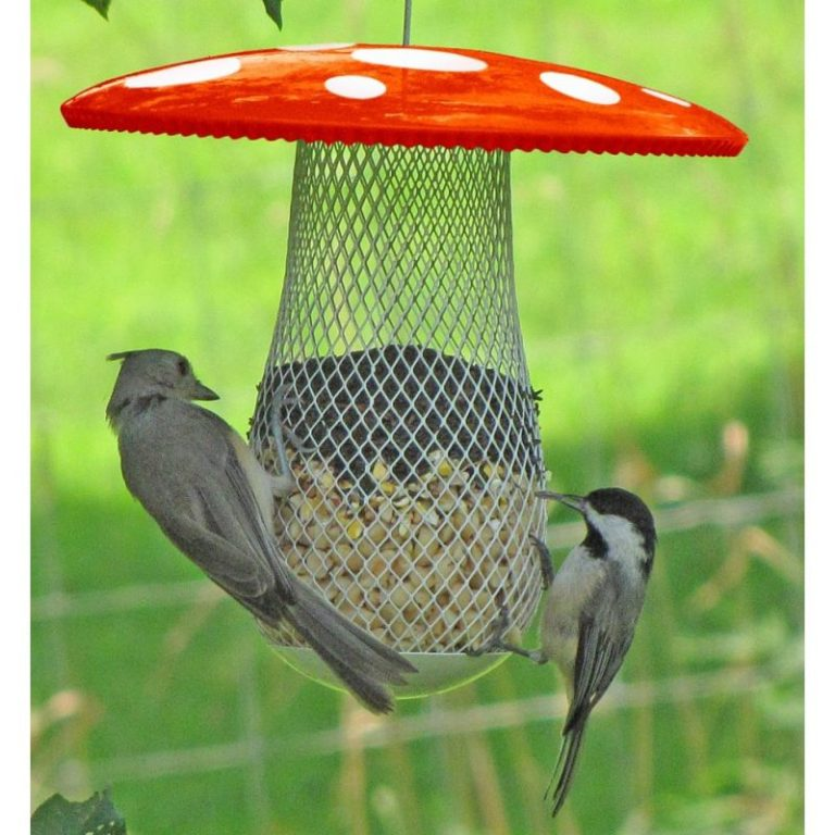 Chilipet The Best Wild Bird Feeder