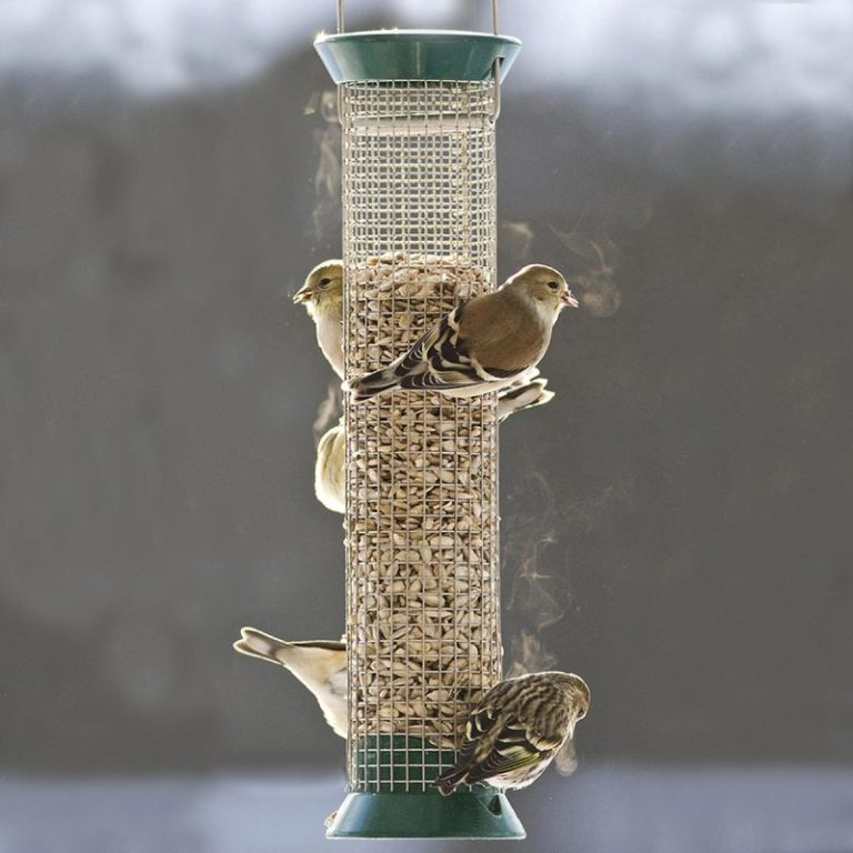 Droll Yankees New Generation Peanut Birdfeeder