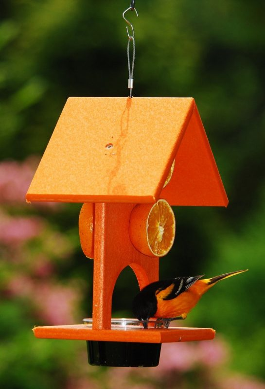 Songbird Essentials SE905 Oriole Feeder