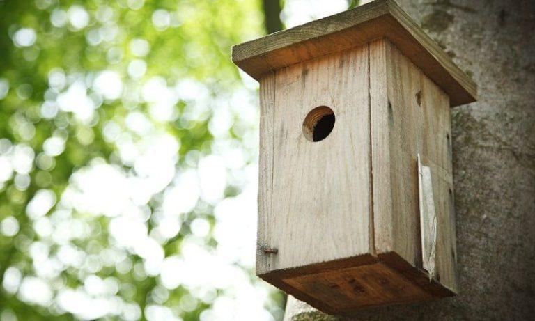 cardinal bird house