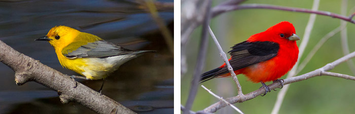 Bird Photography at Point Pelee