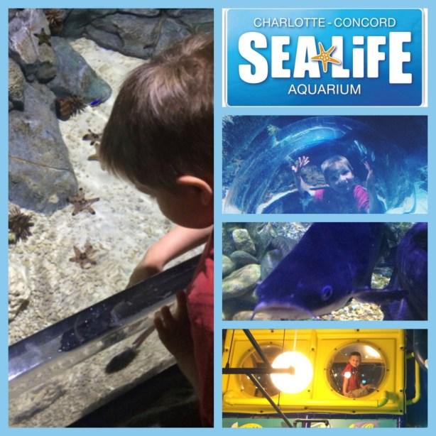 Sea Life Charlotte