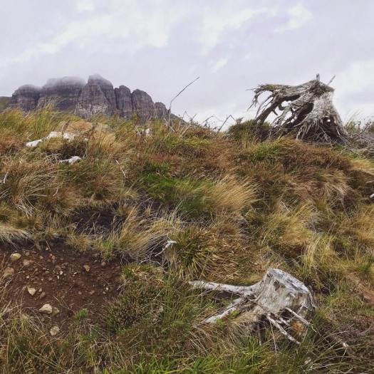 Photo of tree stumps on a grassy hill below mountains