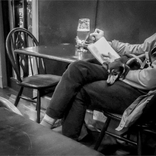 Photo of a person in a pub reading a book and drinking a pint with a small dog on their lap