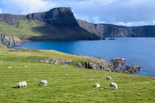 Photo of sheep grazing on the cliffs at Neist Point