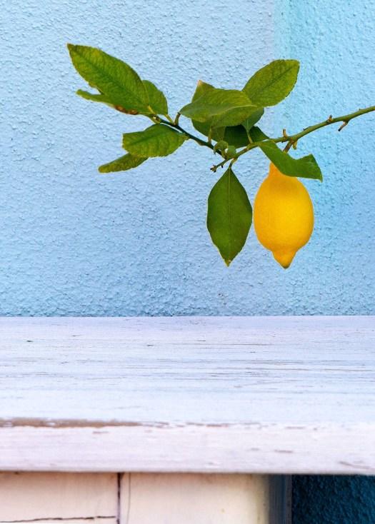 Photo of a lemon growing on a tree