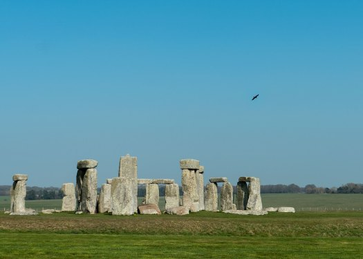 Photo of a raven flying over Stonehenge