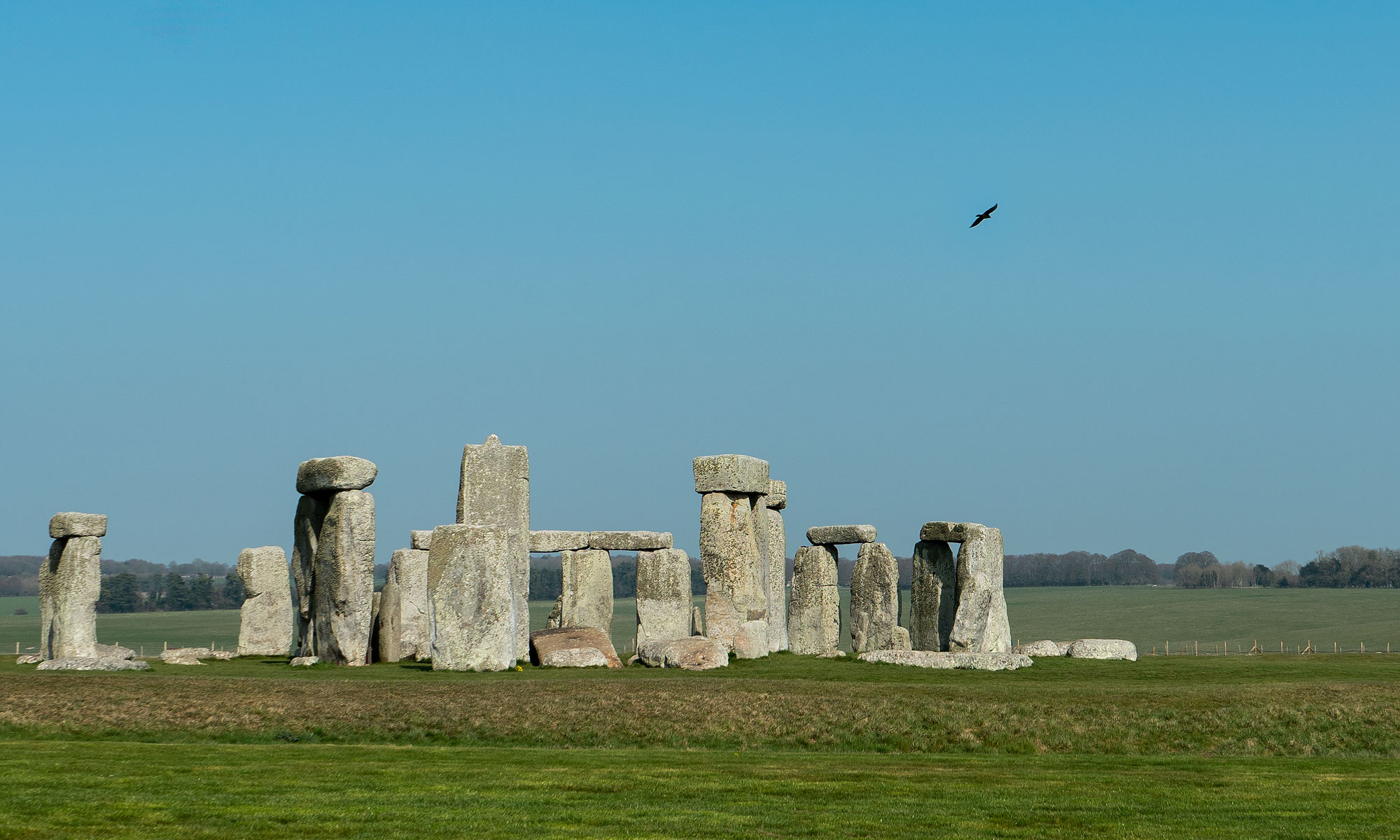 Photo of a raven flying over Stonehenge