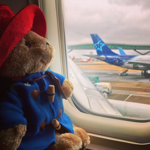 Photo of a Paddington bear stuffy by a plane window overlooking the airport tarmac