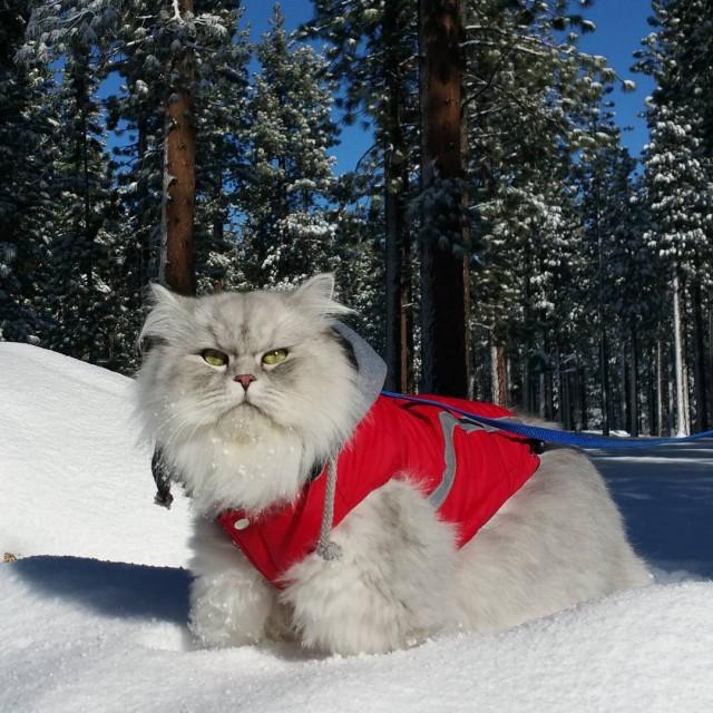 Raduno Gandalf il gatto di viaggio
