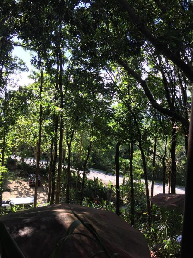 trees at Par Rest & Dine Restaurant