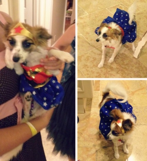 dorothy barkers first halloween