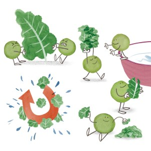 ∫Cooking with Kids: How to Clean and Prep Kale   Kiwi Magazine   2013 © Anna Raff