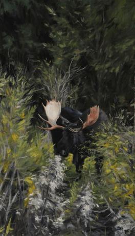 Snake river moose, olja på duk 65x105cm Visas på galleri Hultman, Åstorp 21 april-15maj