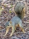 Squirreling Around Again