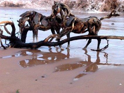 Ocean Horses