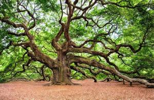 The Oak Intelligence – New Incredible Findings on how the Oak Tree deals with its Life