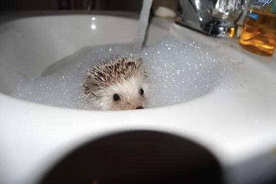 National Bubble Day Bath