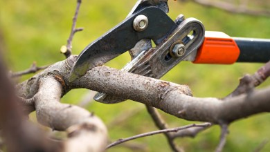 Photo of What Are The Different Types Of Tree Pruning Materials?